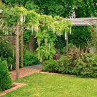 29422 Как подобрать вьющиеся растения для вертикального озеленения сада