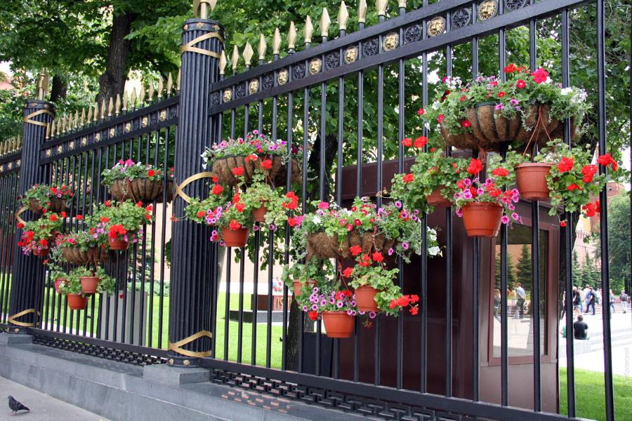 Горшки с цветами на металлическом заборе