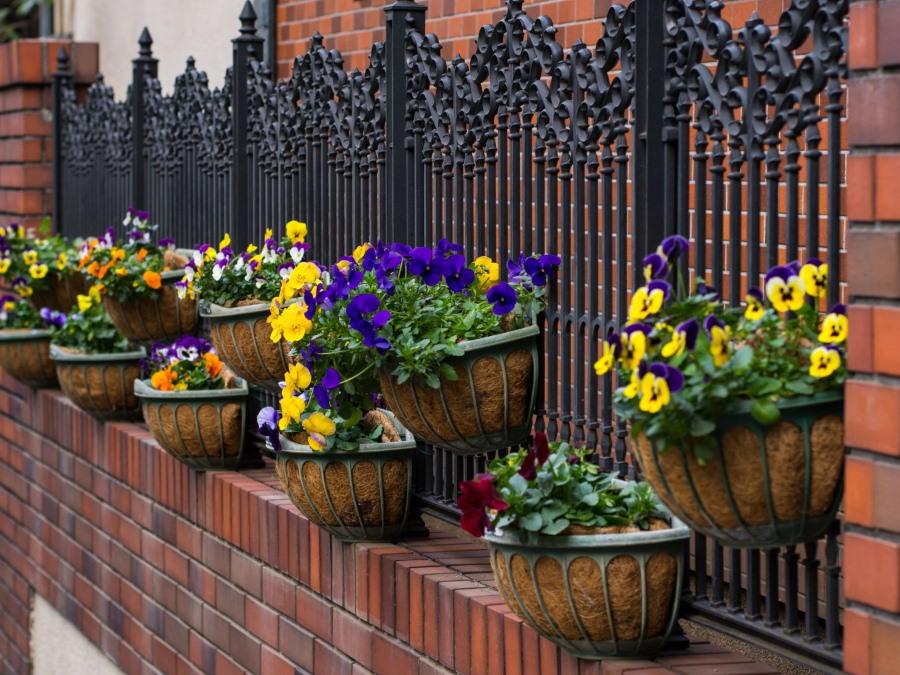 Цветы в кашпо на кованном заборе