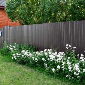 Белый цветы вдоль темного забора из профнастила