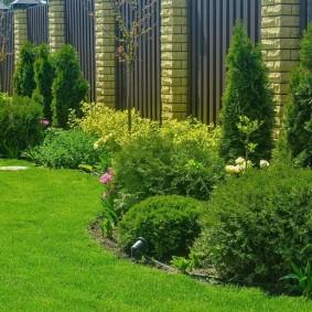 Садовый миксбордер с шаровидными туями
