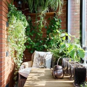 Вьющиеся растения в кашпо на балконе