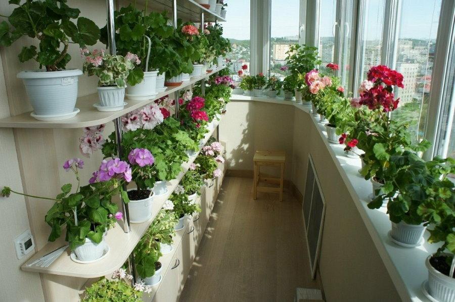 Расположение цветущих растений в интерьере лоджии
