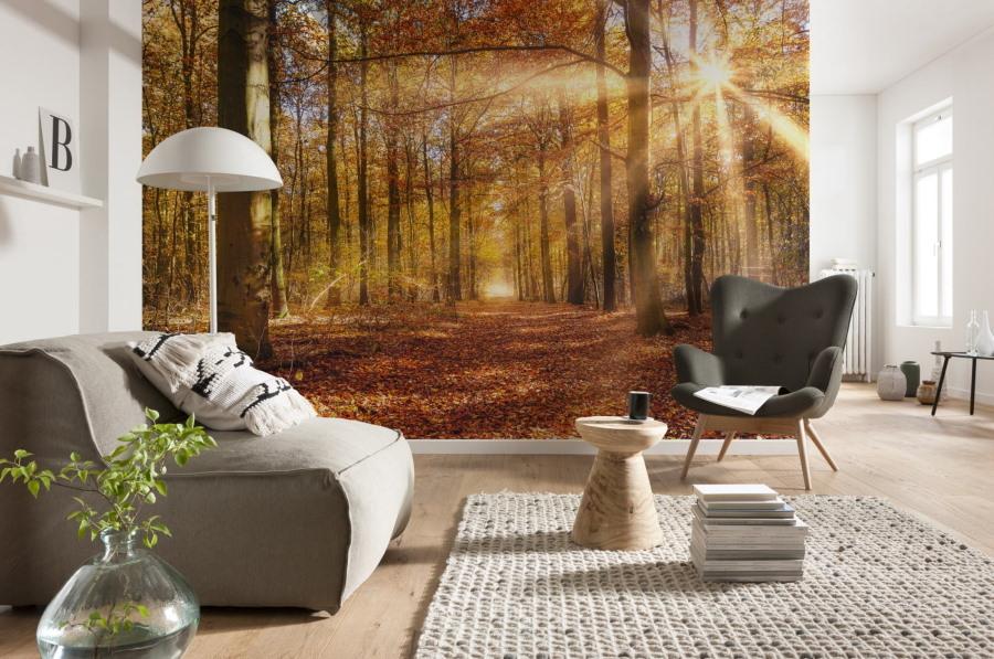 Фотообои осенний лес в оформлении гостиной комнаты