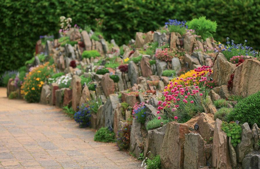 Щелевые скалки на альпинарии с многолетними цветами