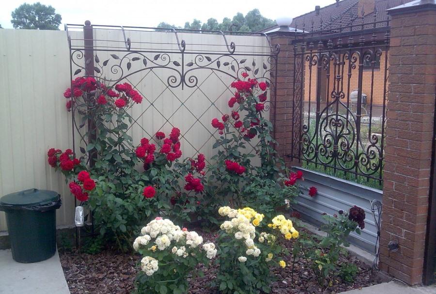 Клумбв с розами у садового забора с ковкой