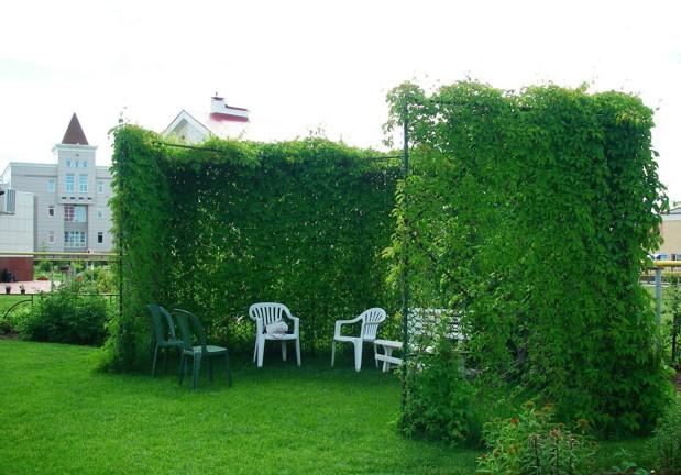 Вертикальное озеленение превратит участок в филиал рая